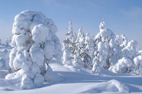Зима в тайге фото 7