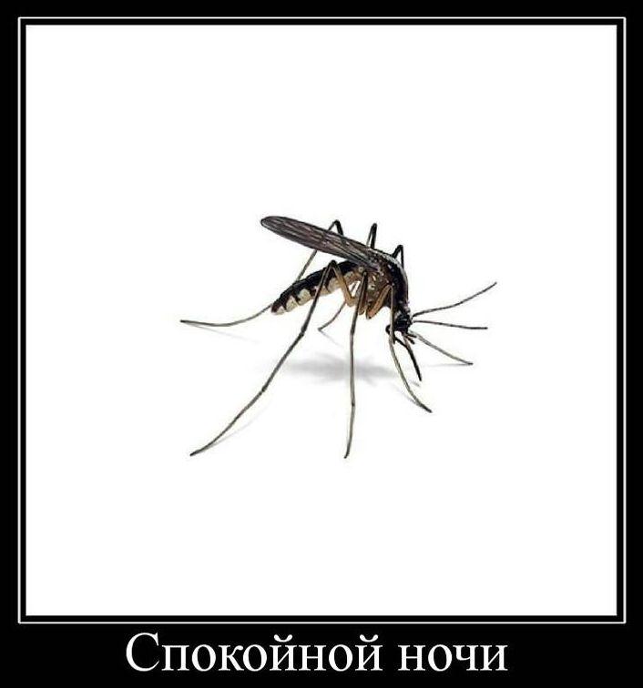 На Луганском направлении ночь прошла спокойно, - спикер АТО - Цензор.НЕТ 2612